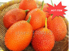 10 Pcs Gac Fruit Seeds Momordica Cochinchinensis Spreng/Cochinchin Gourd Non-GMO