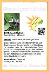 Strelitzia nicolai, Baumstrelitzie, Weiße Paradiesvogelblume, 10 Samen