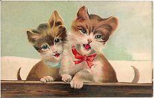 Cute Kittens Postcard #1 ASB No. 249