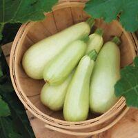 Seeds Squash Zucchini Chaklun White Vegetable Organic Heirloom Russian Ukraine
