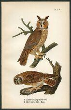 LONG, SHORT-EARED OWL, Vintage 1890 Chromolithograph, Color Print, Antique, 086