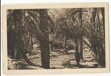 Algeria - Un Coin de Palmeraie  (Palm Grove) - 1930's Postcard