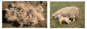 2oz RAW Angora Goat PYGORA  MOHAIR FIBER for Reborn DOLL WIGS, FELTING, SPINNING
