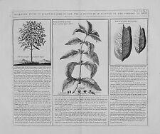 Antica mappa, la descrizione figura ET Qualite DE l'arbre du Café