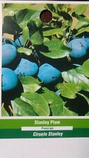 4'-5' Stanley Plum Fruit Tree Plant New Healthy Plums Trees Home Garden Plants