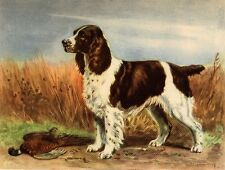 English Springer Spaniel - Dog Art Print - Megargee Matted