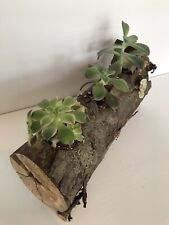 Handcrafted Real Natural Log Planter With 3 Live Plants