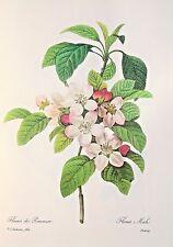 Pierre Redoute-Vintage Color Impresión Botánica-Apple Blossom (109)