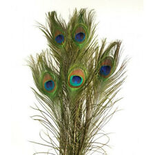 Peacock feathers (10 pieces) +/- 100 cm--Pauwenveren (10 stuks) +/- 100 cm