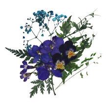 pressed flowers, gypsophila pansy delphinium lobelia foliage, floral art craft