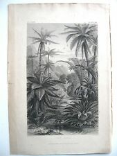stampa antica old print BOTANICA ALBERO FELCE FELCI TREE FERNS Londra 1862
