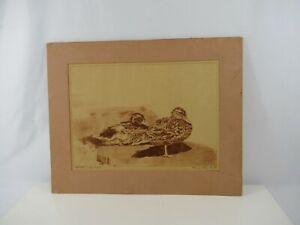Duck Drawing Signed Pencil Mallard Pair Artists Edition Mat VTG Red Terracotta