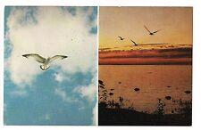 Sea Gulls - Nature At Play Seagulls 2 Views Waterfowl Flight Water Bird Postcard
