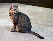 Metal Magnet Egyptian Mau Cat Gray Black Cats Magnet