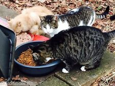SPONSOR EVICTED RELOCATE FERAL CATS RESCUE REC COLOR PHOTO HELPS FEED VET COSTS