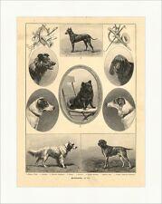 Rassehunde Foxterrier Zwergspitz Bluthund Vorstehhund Setter Holzstich W 655