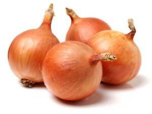 "Onion Seeds ""Gladalan Brown""(Approx 200 Seeds),Excellent Garden Vegetable"
