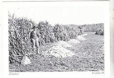 "*Postcard-""The Cornfield"", 1938-  ...CLASSIC-  *Culpeper, VA  (#160)"