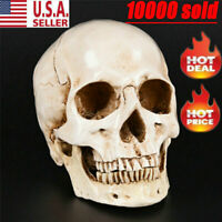 Realistic Retro Human Skull Replica Resin Model 1:1 Medical Art Teach Life Size