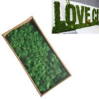 75 Stück Stachys Blätter Wollziest konserviert rot haltbar Naturdeko flauschig