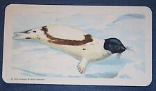 HARP SEAL    SADDLEBACK SEAL    Vintage Colour Card   VGC