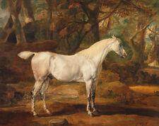 Grey Arabian Stallion property of Sir Watkin Williams-Wynn Horse Ward B a3 00109