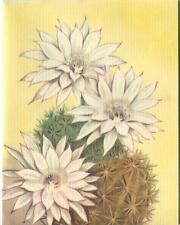 VINTAGE WHITE EASTER LILY DESERT CACTUS FLOWERS LITHOGRAPH NOTE CARD ART PRINT