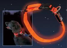 NITE IZE LED Hundehalsband Größe: 33 - 46cm Stets gesehen werden! Niteize
