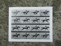 Vintage fine art print - Man riding galloping horse by Eadweard Muybridge