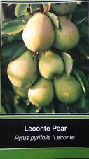 4'-5' LECONTE PEAR Tree Plant Health Fruit Trees Natural Juicy Pears Home Plants
