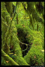 MUSIC OF THE RAINFOREST CD, RELAXATION, NATURAL SOUNDS