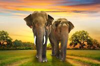 Fototapete-ELEFANTEN-(353P)-350x260cm-7Bahnen 50x260cm-Afrika Tiere Bäume Sunset