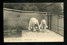 Animal postcard Polar Bear at the Zoo London UK Vintage