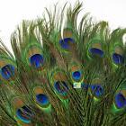 Real Natural Peacock Tail Eye Feathers 9-12 Inches 50pcs 100pcs 150pcs 200pcs GA