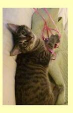 Malibu 2014 Weekly Calendar : A Week by Week Calendar with a Cover Photo of...