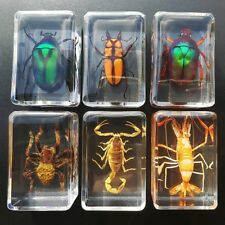 Spider butterfly Scorpion Insect Specimen in clear Resin Paperweight Specimen