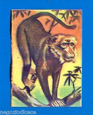 ANIMALI - Lampo 1964 - Figurina-Sticker n. 43 - MACACO -New