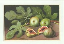 137902 stupenda cartolina artistica frutta di s. bonelli
