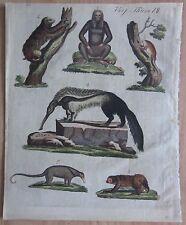Bertuch: Sloths, Unau, Ai, Anteater - 1799