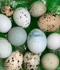 7 Hollow Blown Quail Eggs For Crafts Rare Colors 1 Hole Free Shipping