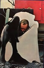 Sea World San Diego Vintage Post Card Shamu Killer Whale Trainer
