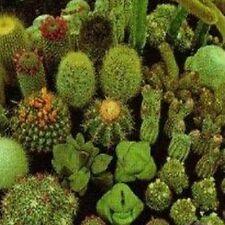 50 Cacti mix