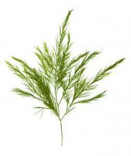 15ml Pure Tea-tree Essential Oil, Aromatherapy Ti-tree T-tree