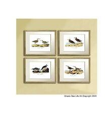 Antique Bird prints Sea Birds Audulon Bird print Lot of 4 reproduction Wall Art