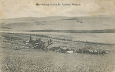 OR * Harvesting Grain in Eastern Oregon 1909  Horse Drawn Thresher Tigard PM