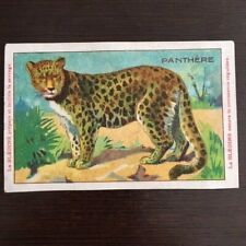 Chromo Bledine Jacquemaire Animaux Sauvages La PANTHERE - The Panther