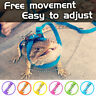 Lizard leash Reptile harness Adjustable Multicolor bearded dragon small animal