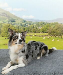 VETBED Non-slip Fleece,  British Wool Blend & Recycled plastic - eco-dog bedding