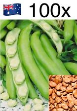 100 Seeds Broad Bean 'Aquadulce' Garden Vegetables Plant Fava Faba