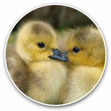 2 x Vinyl Stickers 25cm - Canadian Gosling Chick Cool Gift #14143